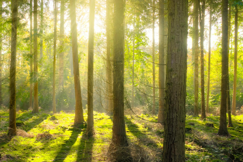 Hvornår er et skovbrug en erhvervsmæssig virksomhed i skattemæssig henseende?