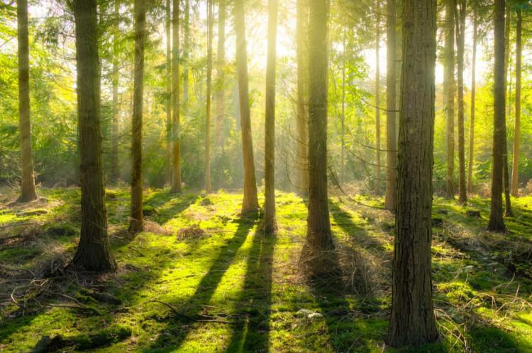 Offentlige udbud: 2021 bliver grønt
