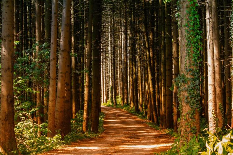 Skovbrug anset som selvstændig økonomisk virksomhed i momsmæssig henseende