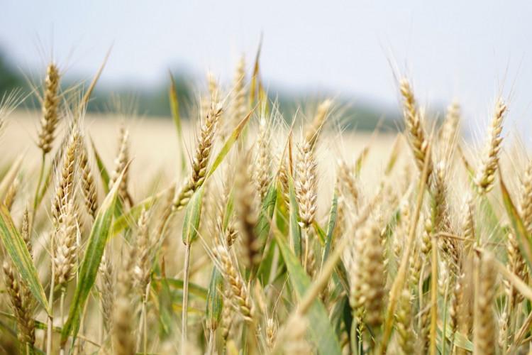 Ny afgørelse ser på behandling af EU-støtten ved fortsat drift af konkursramt landbrug