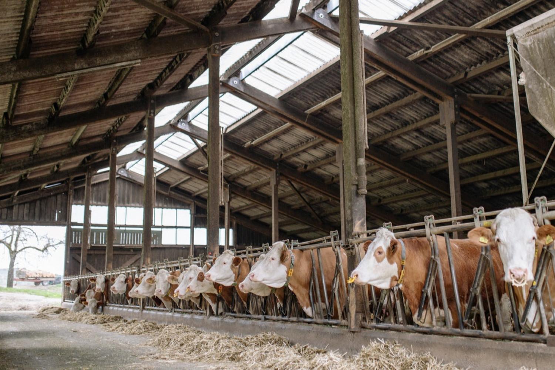 Landsskatteretten godkender straksfradrag på ny staldtilbygning