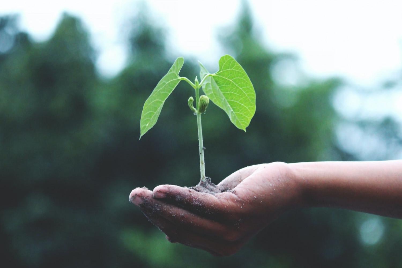 Bæredygtige egnetheds- og udvælgelseskriterier skarpvinkler den bæredygtige udbudsproces fra start